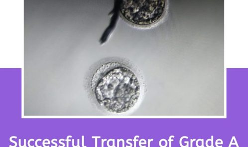 Grade A Blastocyst embryos